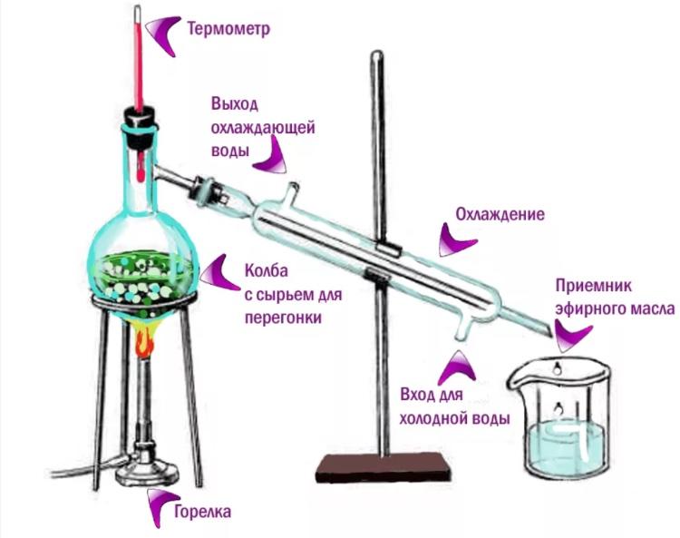 Ароматерапия - приготовление эфирного масла дома