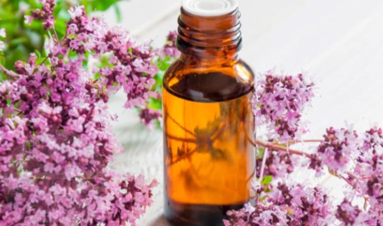 Настойка из душицы - целебные растения при остеохондрозе