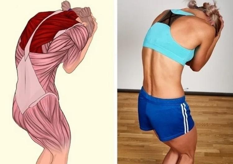 Растяжение шеи и укрепление верхней части спины