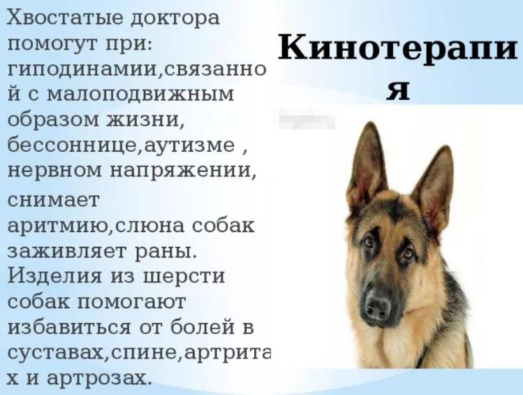 Изделия из шерсти собак