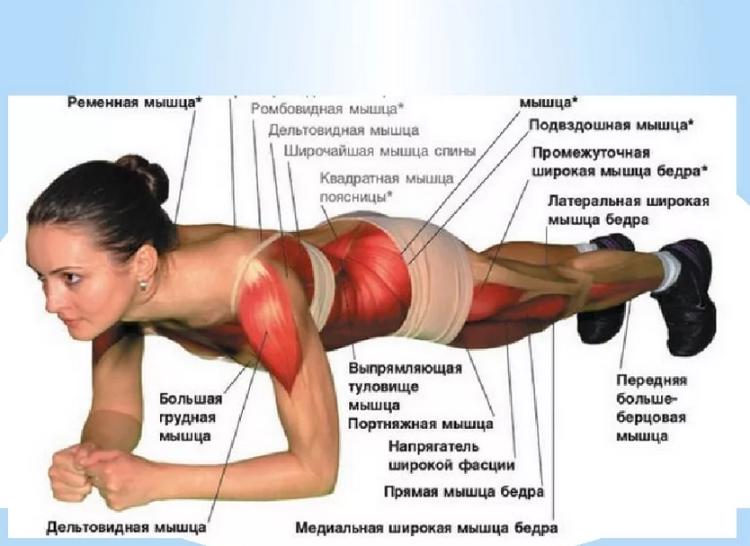 Название мышц при данном упражнении.