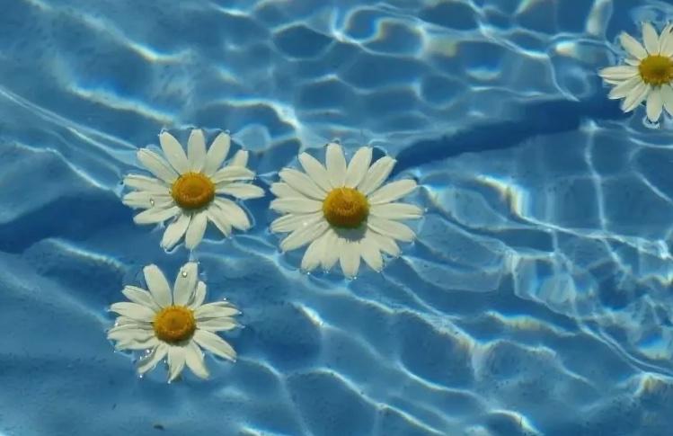 Ванна из цветков ромашки